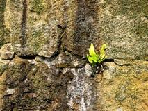 Alte Abteiwand von Sandsteinen Stockbild