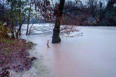 Alte acque di fiume Immagini Stock