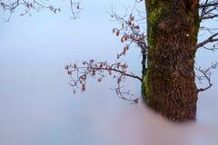 Alte acque di fiume Fotografia Stock Libera da Diritti