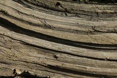 Alte altersschwache trockene hölzerne Beschaffenheit oder Hintergrund Stockbild
