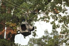 Alte Ampeln und Baum Lizenzfreie Stockfotografie