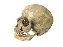 Alte archäologische finden menschlichen Schädelschädel lokalisiert auf Weiß Stockbild