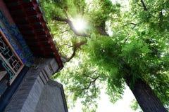 Alte Architektur und alter Baum Lizenzfreie Stockfotos