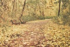 Alte Bänke am Herbsttag, viele gefallenen Blätter, Wegspur auf den Stadtränden des Parks Stilisiert als alte Weinleseart Stockfoto