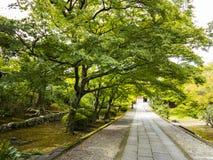 Alte Bäume über Steinweg Stockfotografie
