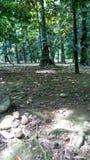 Alte Bäume Stockfotos