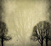 Alte Bäume stockfotografie