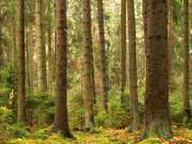 Alte Bäume stockfoto