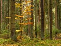 Alte Bäume lizenzfreie stockbilder