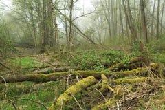 Alte Bäume Lizenzfreie Stockfotografie