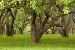 Alte Bäume Stockbild