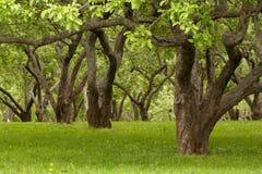 Alte Bäume Stockbilder