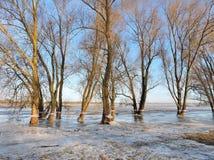 Alte Bäume auf dem Flutgebiet, Litauen Lizenzfreies Stockbild