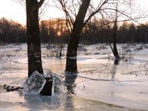 Alte Bäume auf dem Flutgebiet, Litauen Lizenzfreie Stockfotografie