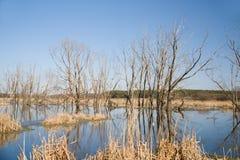 Alte Bäume auf der Bank des Flusses im Frühjahr gegen das Blaue Stockfoto