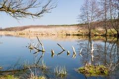 Alte Bäume auf der Bank des Flusses im Frühjahr gegen das Blaue Lizenzfreie Stockfotografie