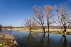 Alte Bäume auf der Bank des Flusses im Frühjahr gegen das Blaue Lizenzfreie Stockfotos