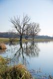 Alte Bäume auf der Bank des Flusses im Frühjahr gegen das Blaue Stockfotografie