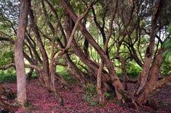 Alte Bäume in der Schlosspark-Landschaftsphotographie Lizenzfreie Stockfotografie