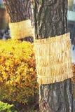 Alte Bäume der Weinlese in der Natur Stockfoto