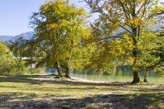 Alte Bäume durch den Bohinj See, Slowenien Lizenzfreies Stockfoto