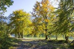 Alte Bäume durch den Bohinj See, Slowenien Stockbild