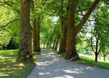 Alte Bäume in einem Park im Sommer Stockfotografie