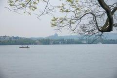 Alte Bäume Hangzhous Westsee Lizenzfreies Stockfoto