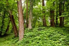 Alte Bäume im Busch des parkf Lizenzfreie Stockbilder