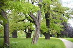 Alte Bäume im jungen Frühjahr Lizenzfreie Stockfotos