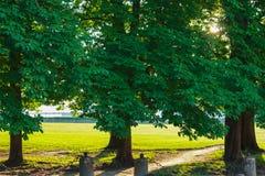 Alte Bäume im malerischen Gassenpark Stockfotos