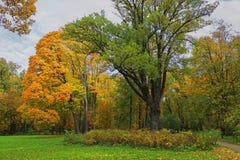 Alte Bäume im Park des Zustandes Stockfotos