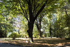Alte Bäume im Park eines sofiyevka in Uman Stockbilder