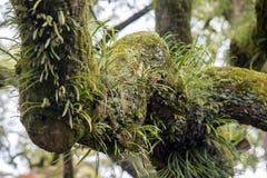 Alte Bäume mit Flechte und Moos Lizenzfreies Stockfoto