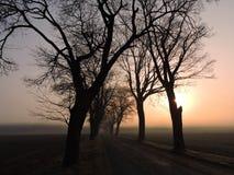 Alte Bäume nähern sich Straße und Nebel im Sonnenaufgang, Litauen Lizenzfreie Stockbilder