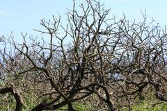 Alte Bäume, Natur-Szene, Hintergrund Stockfotos