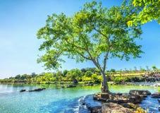 Alte Bäume reflektiert durch den Fluss Lizenzfreie Stockfotos