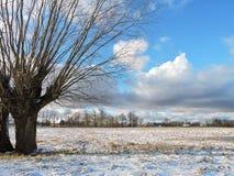 Alte Bäume in Rusne-Insel im Winter, Litauen Lizenzfreies Stockfoto