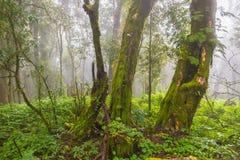 Alte Bäume und andere Vegetation in einem Regenwald von Nordthailändischem Lizenzfreies Stockfoto