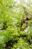 alte Bäume und Baumknospen Stockbild