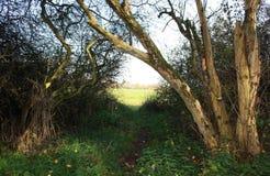 Alte Bäume und eine Wiese Stockbild