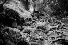Alte Bäume und schwarzes Weiß der Felsen lizenzfreie stockfotografie