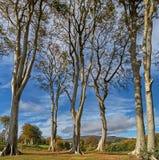 Alte Bäume vor einem blauen Sommerhimmel Stockbilder