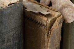 Alte Bücher auf Bücherregal mit Eichenblättern Lizenzfreies Stockbild