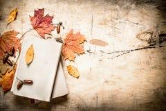 Alte Bücher und Herbstlaub Lizenzfreie Stockfotografie