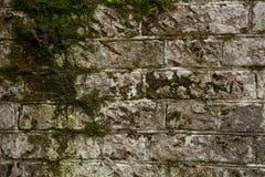 Alte Backsteinmauer überwältigt mit Moos Stockbilder