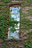 Alte Backsteinmauer bedeckt in den üppigen grünen Blättern des Efeus Lizenzfreie Stockfotografie