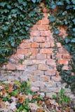 Alte Backsteinmauer bedeckt mit grünem Efeu Lizenzfreies Stockbild