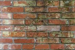 Alte Backsteinmauer bedeckt mit Moos Lizenzfreies Stockfoto