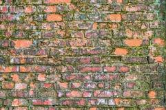 Alte Backsteinmauer bedeckt mit Moos Lizenzfreies Stockbild